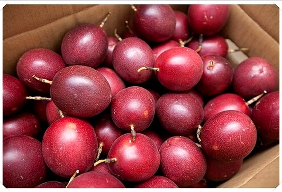 passion fruit chanhday chanhleo